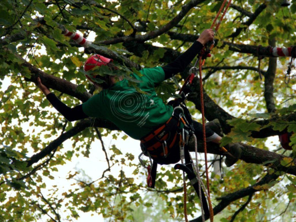 Ošetření stromu a jeho postupné odlehčení poškozených větví