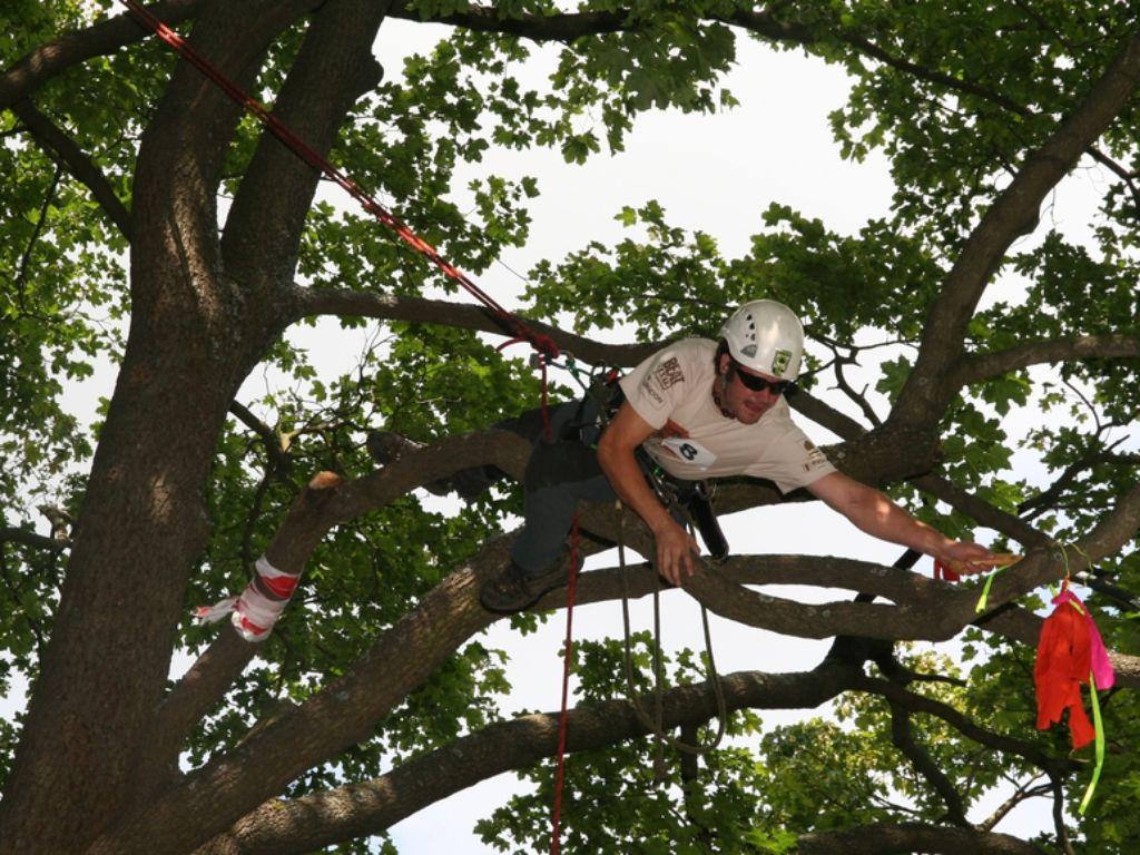 Optimální jištění arboristy v koruně stromu