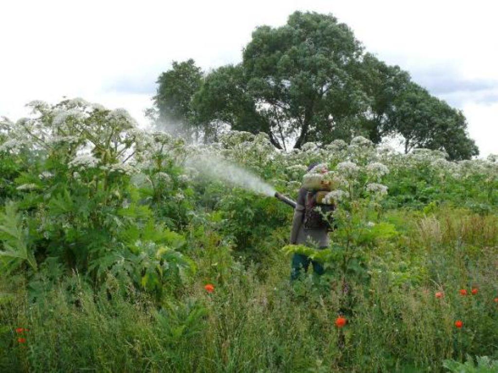 Odborný postřik herbicidním přípravkem