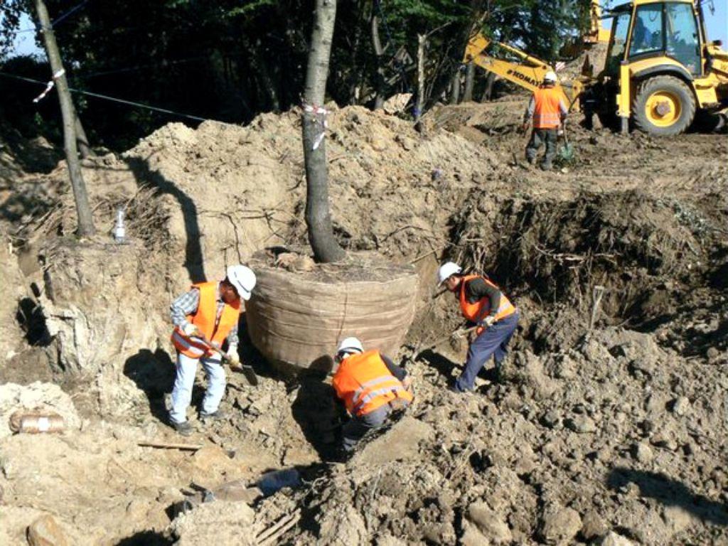 Přesadba vzrostlých stromů 50 let starých před výstavbou nového areálu