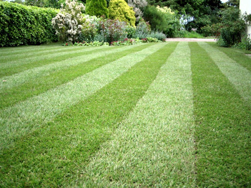 Sekání, hnojení, vertikutace Vašich trávníků