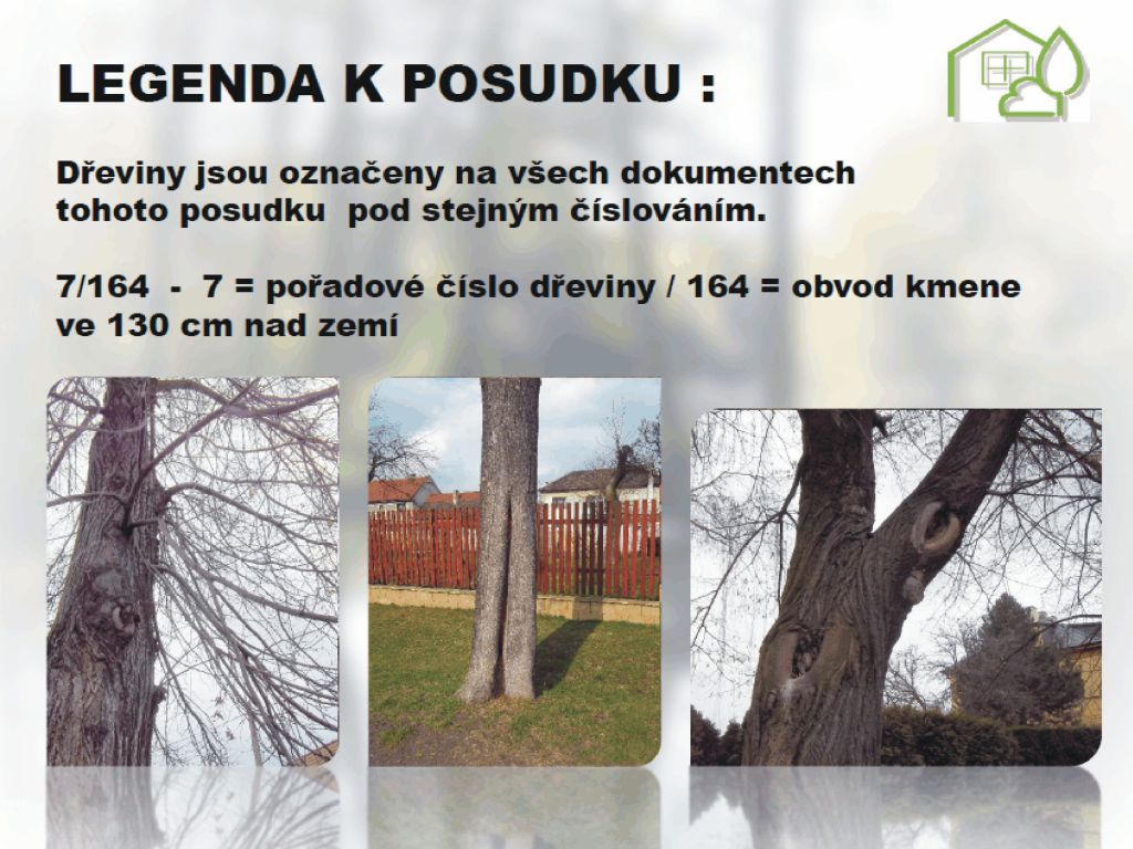 Zmapovaní konkrétního stromu v legendě