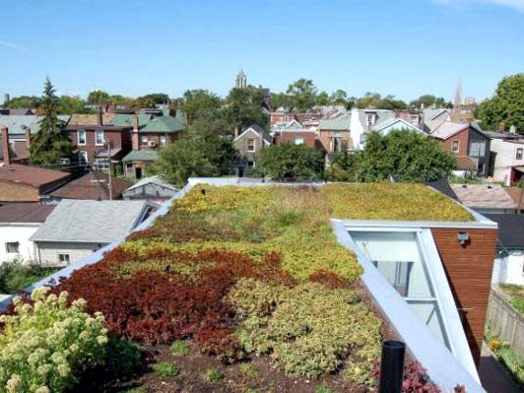 Bezúdržbová střešní zahrada s rozchodníky