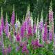 Sama příroda zahradníkem – Krupka