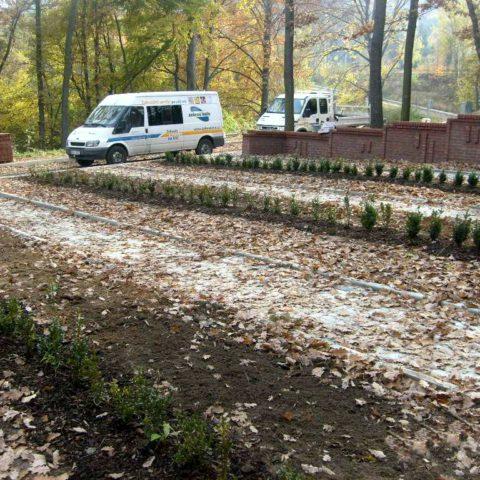 Výsadby buxusů na hřbitově