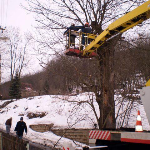 Odstranění stromu z plošiny