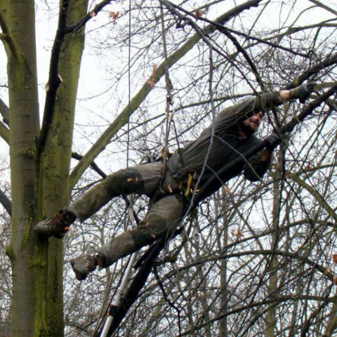 Bezpečnostní a výchovný řez stromů v parku